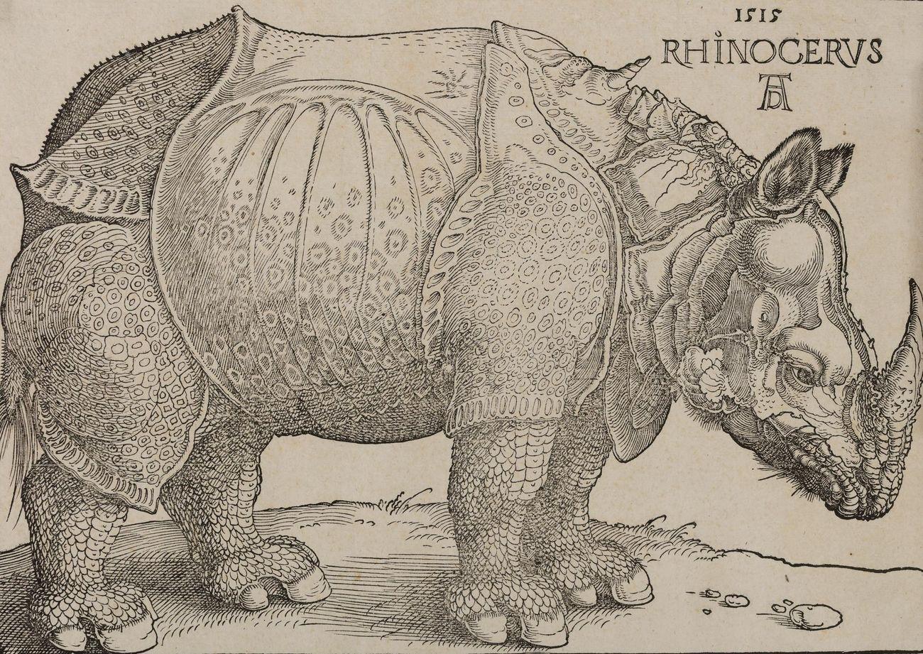Albrecht Dürer, Rinoceronte, xilografia, 215x300 mm. Collezione Remondini