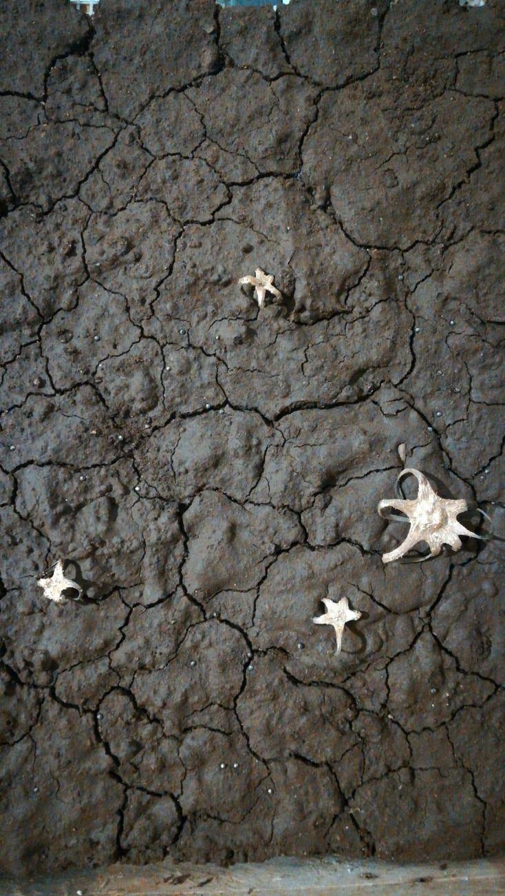 Concetta Modica, Ascensione, 2019, terra, sepali di pomodoro, oro zecchino, cm 20x30. Courtesy l'artista & FPAC.