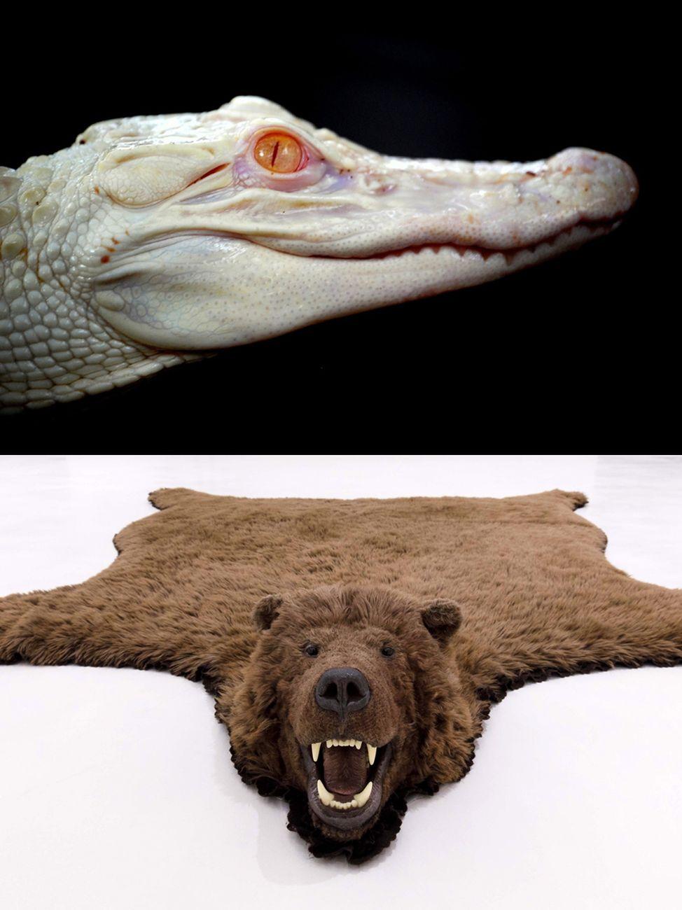 Sopra, un coccodrillo albino frutto di radiazioni da un film di Werner Herzog _ sotto, l'orso sintetico di Paola Pivi