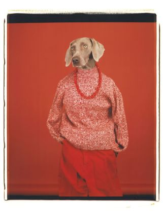 William Wegman, Casual, 2002. Proprietà dell'artista © William Wegman