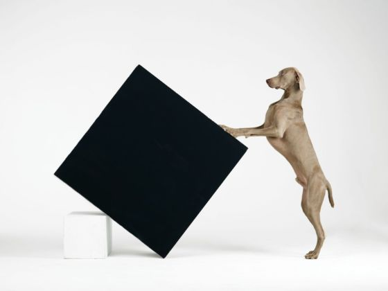 William Wegman, Constructivism, 2014. Proprietà dell'artista © William Wegman