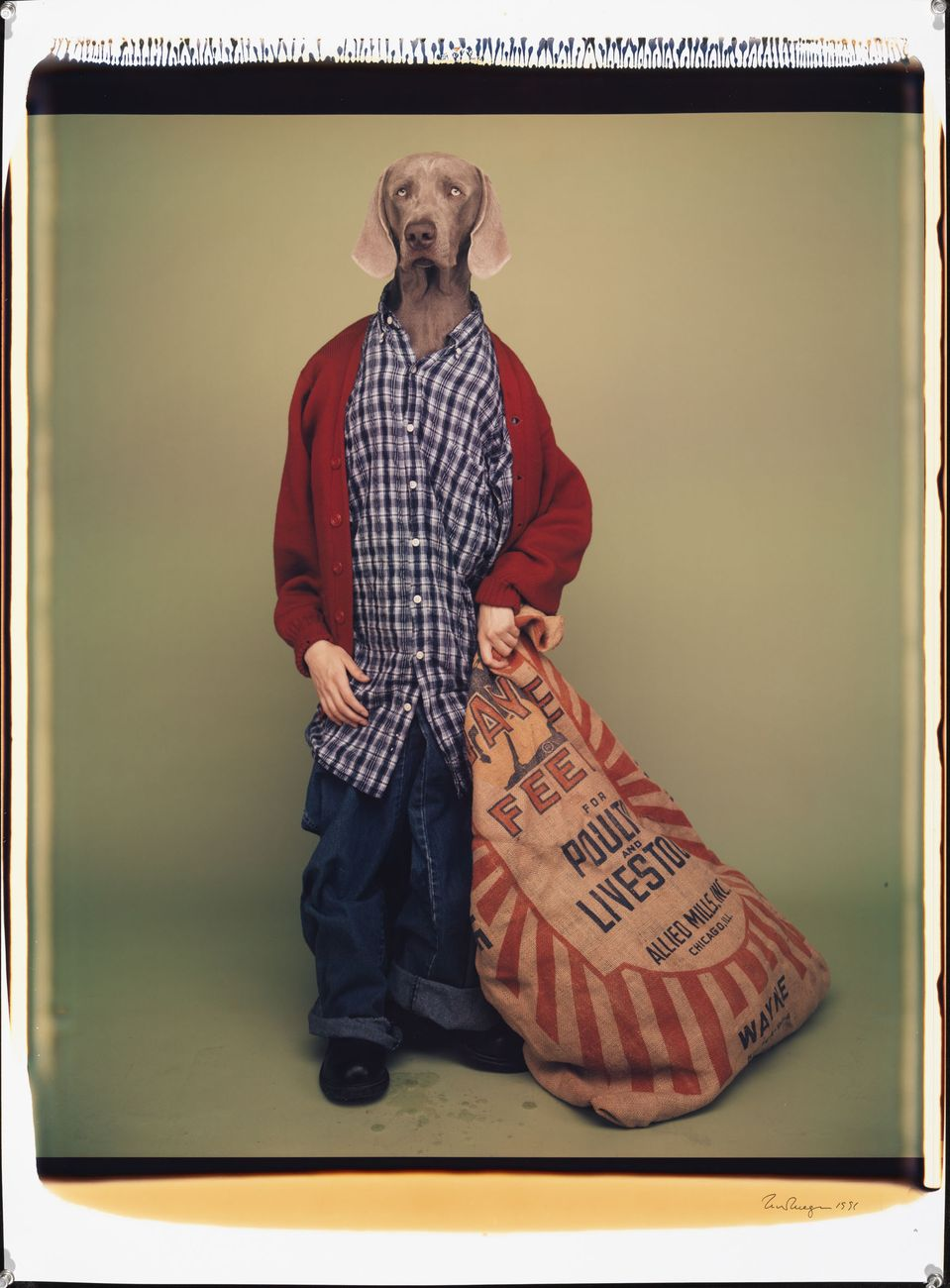William Wegman, Farm Boy, 1996. Proprietà dell'artista © William Wegman