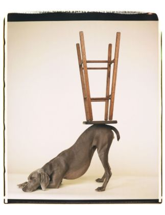 William Wegman, Upside Downward_2006. Proprietà dell'artista © William Wegman