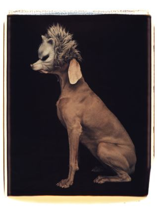 William Wegman, Wolf, 1994. Proprietà dell'artista © William Wegman