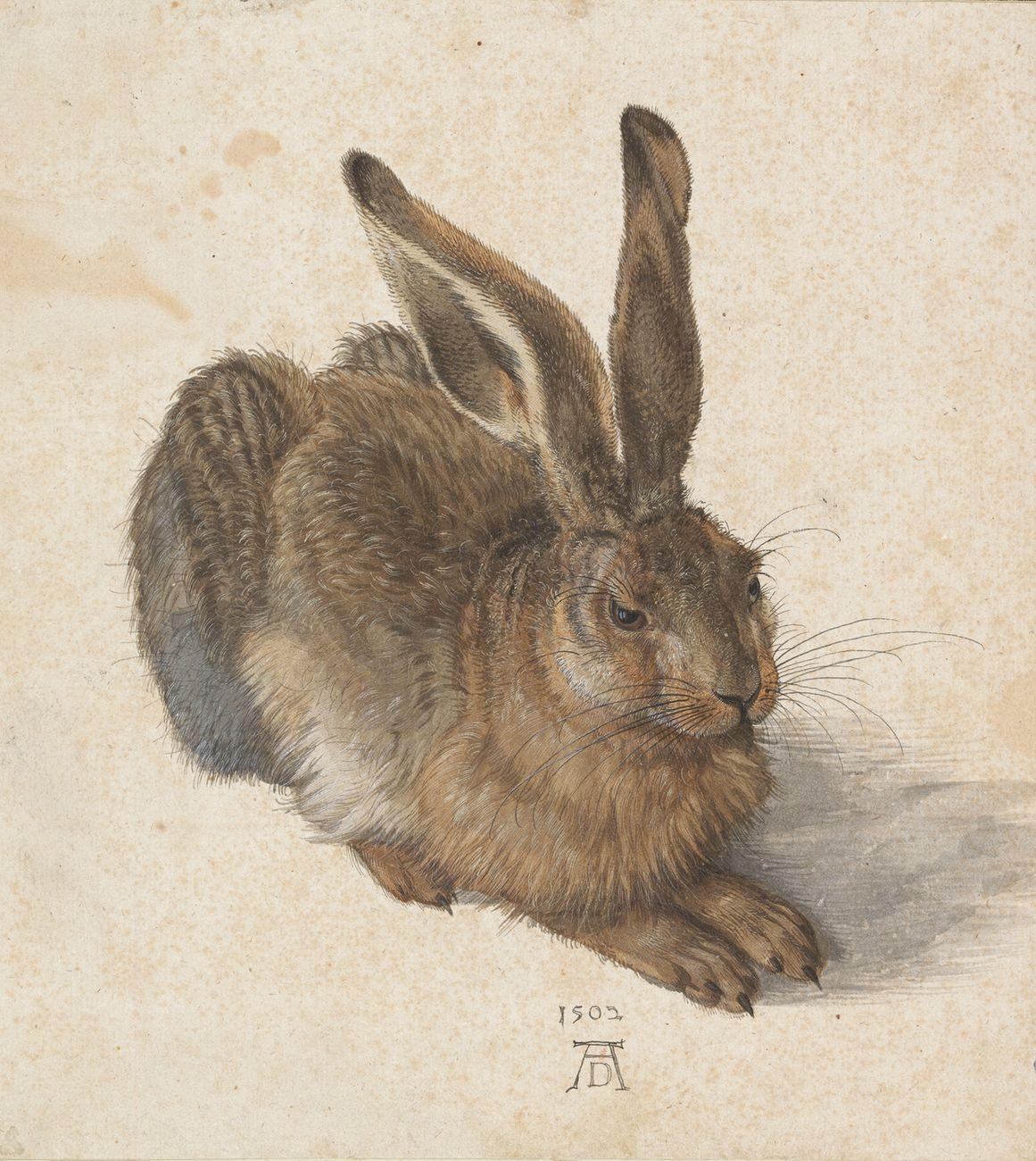 Albrecht Dürer, Feldhase, 1502 © Albertina, Wien