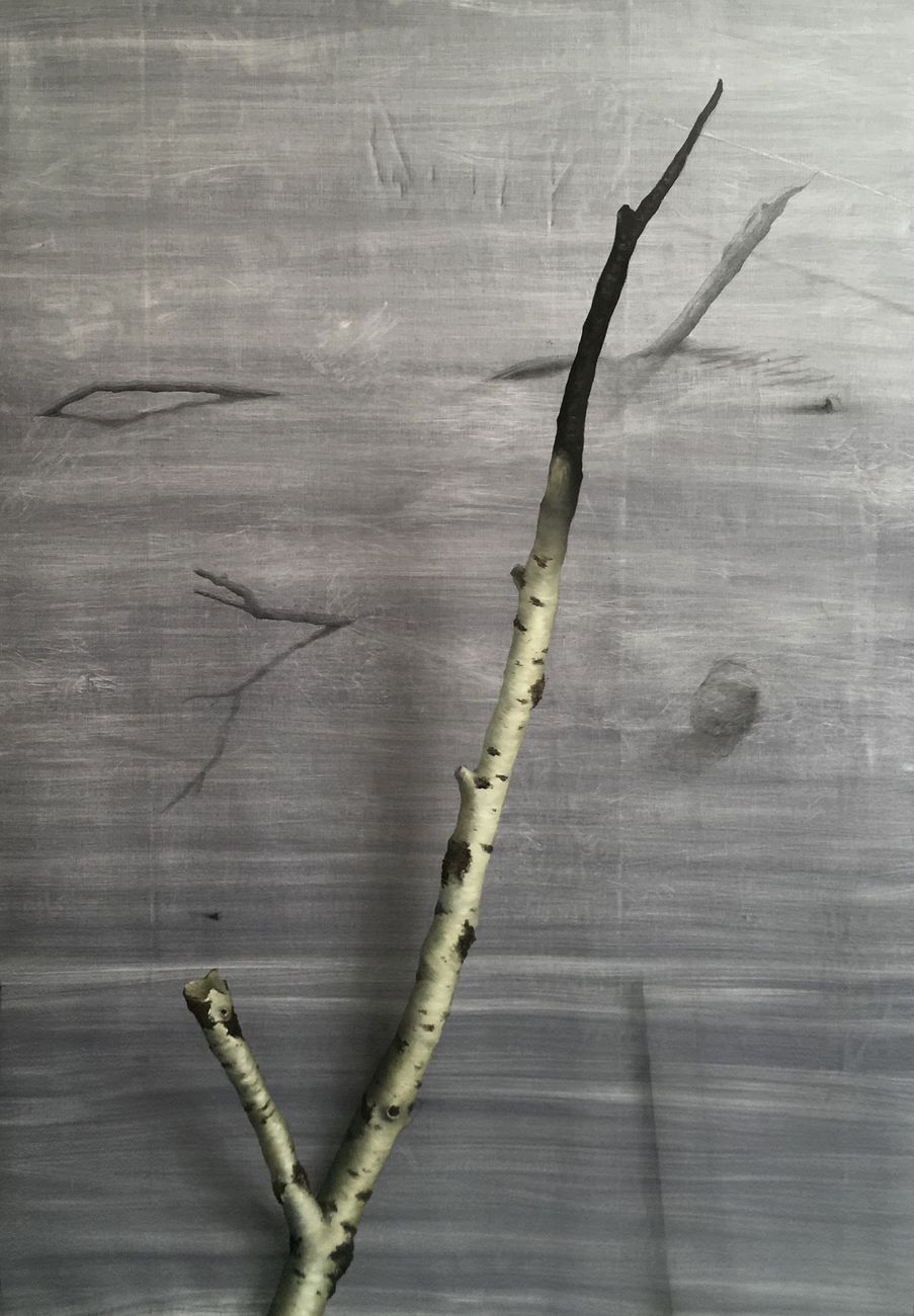 Linda Carrara, Betulla, 2019, olio e grafite su lino, cm 160x110