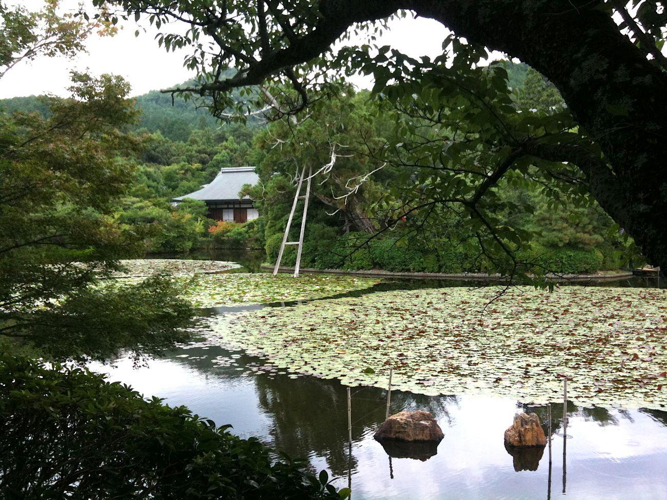 Giardini Zen a Kyoto. Photo Claudia Zanfi