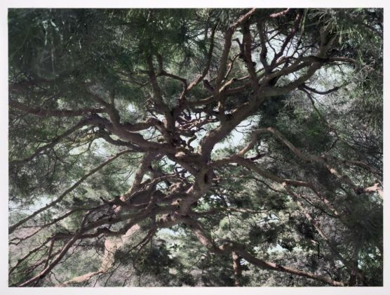 Shi Guowei Pine, 2016 Painting on photograph 142 x 190.3 cm © Mr. Xi Tao 2020 Courtesy the artist and Magician Space, Beijing