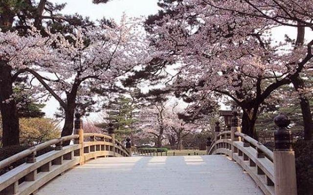 Ciliegi in fiore in Giappone, ph ViaggioRoutard, fonte Flickr