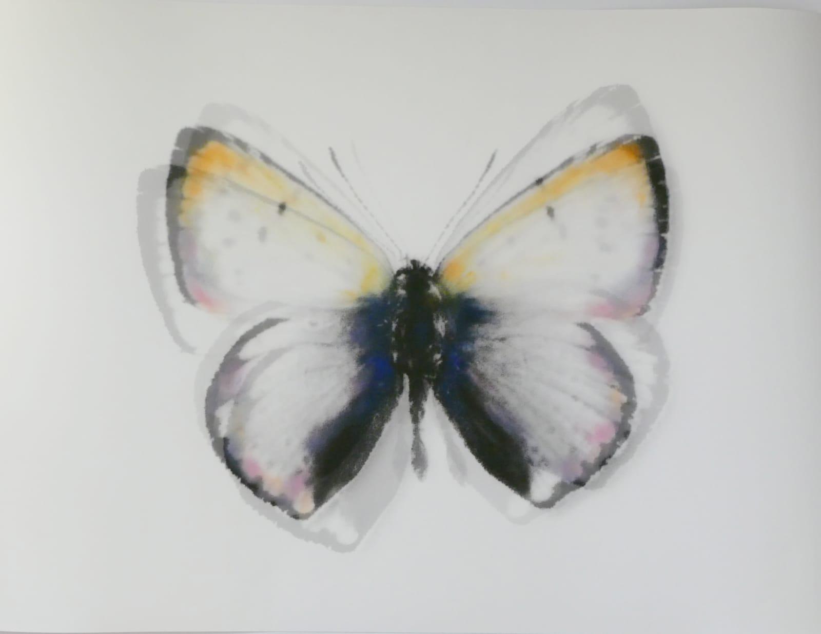 Farfalle Stefania Ricci Galleria Shazar Napoli