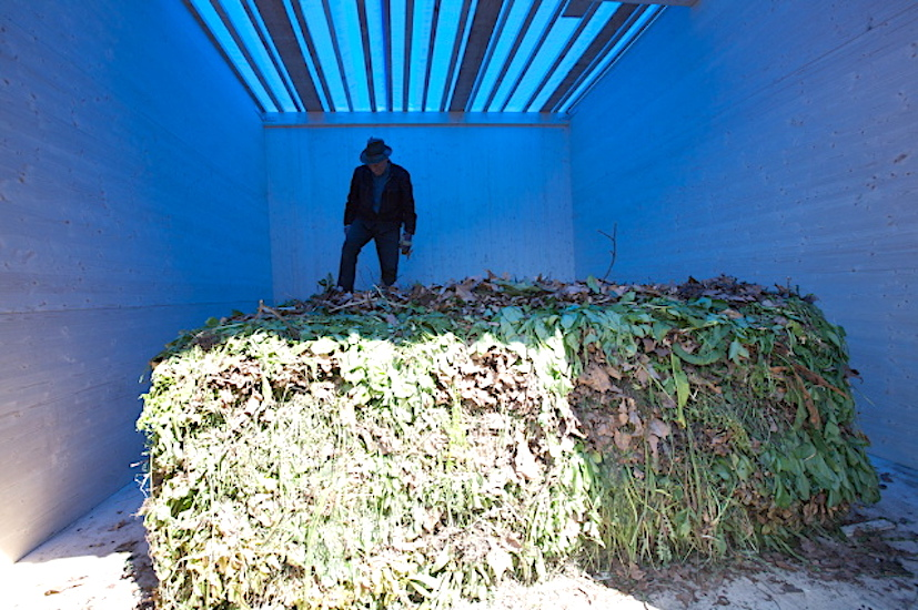Lois Weinberger, Venice Biennial