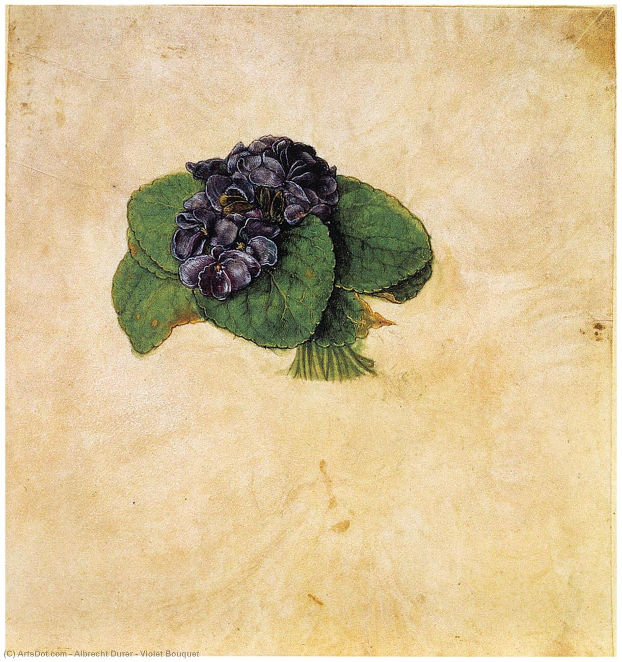 Albrecht Dürer, Bouquet di viole, 1502