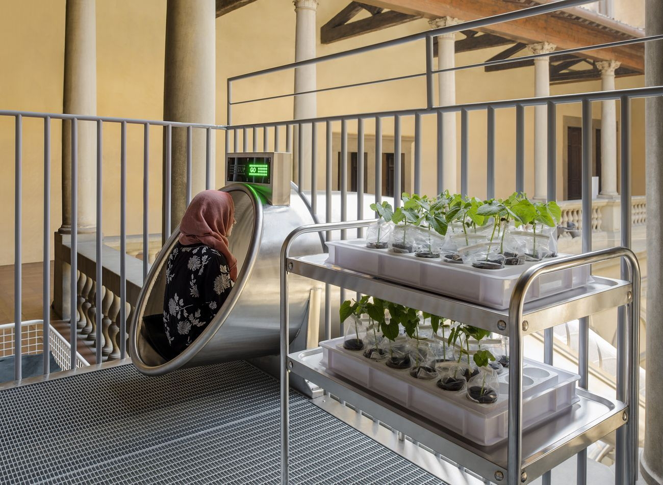 Carsten Höller, Plant Decision-Making Based on Human Smell of Fear and Joy, 2018. Installation view at Palazzo Strozzi, Firenze 2018. Photo Attilio Maranzano, courtesy the artist © Carsten Höller