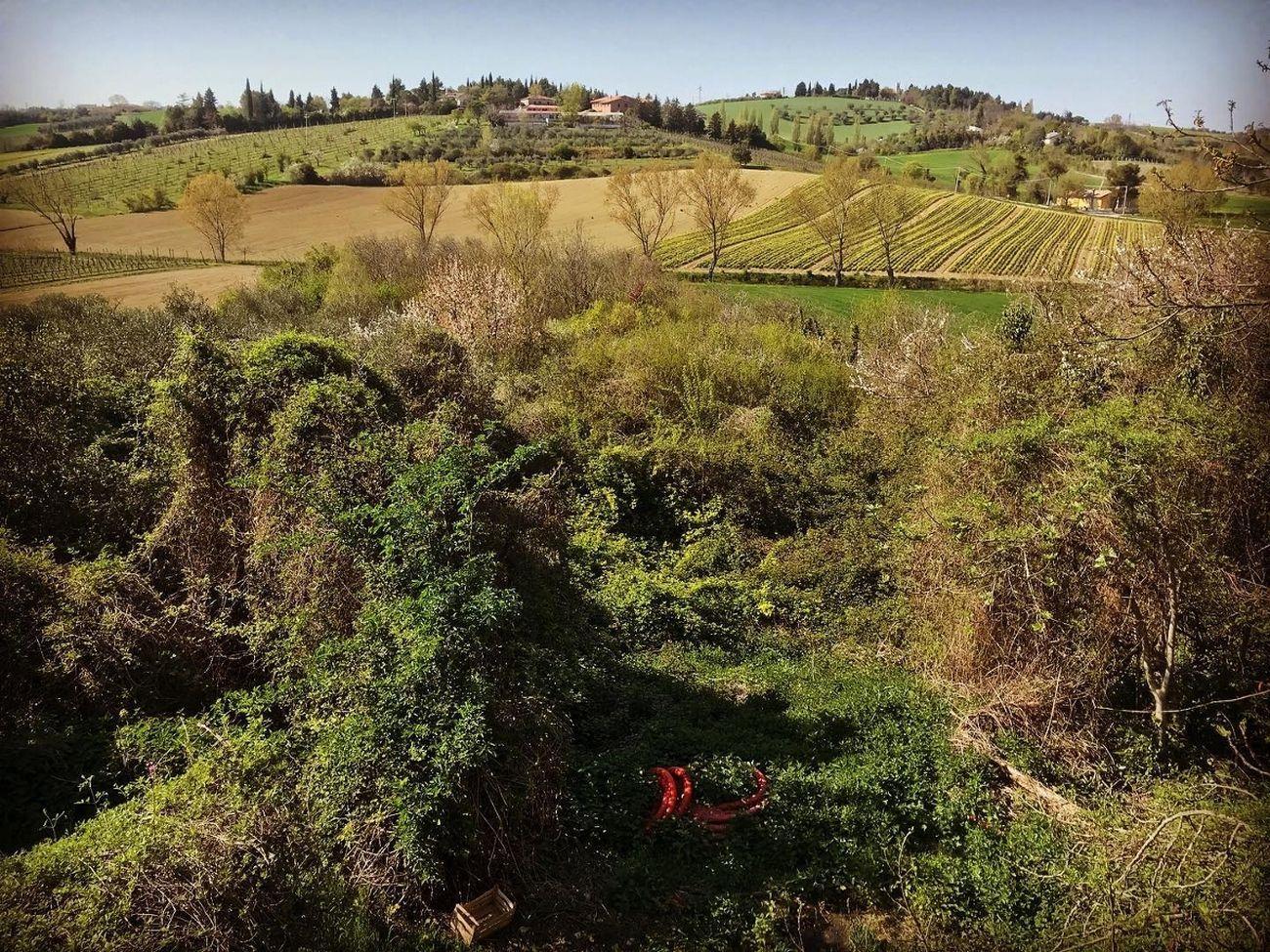 Giardini Pensili, sulle colline di Rimini, dove ha sede la regia temporanea di Usmaradio