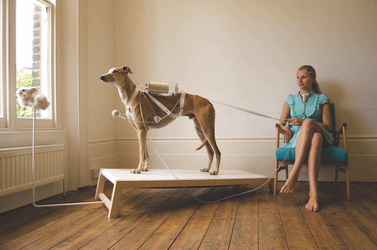 """""""Life Support Respiratory Dog"""", progetto di due giovani designer del Royal College of Art di Londra, Revital Cohen e Tuur Van Balen, in cui un cane viene usato come sostituto di un ventilatore meccanico"""