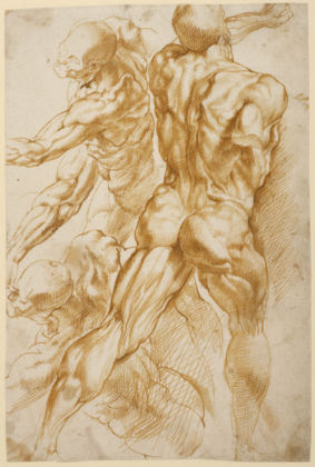 Anatomical Studies; Peter Paul Rubens (Flemish, 1577 - 1640); about 1600–1605; Pen and brown ink; 27.9 × 18.7 cm (11 × 7 3/8 in.); 88.GA.86; courtesy of the Getty's Open Content Program