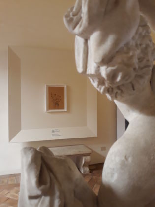 Filippo De Pisis. Exhibition view at Museo Nazionale Romano – Palazzo Altemps, Roma 2020. Photo A. Colombo