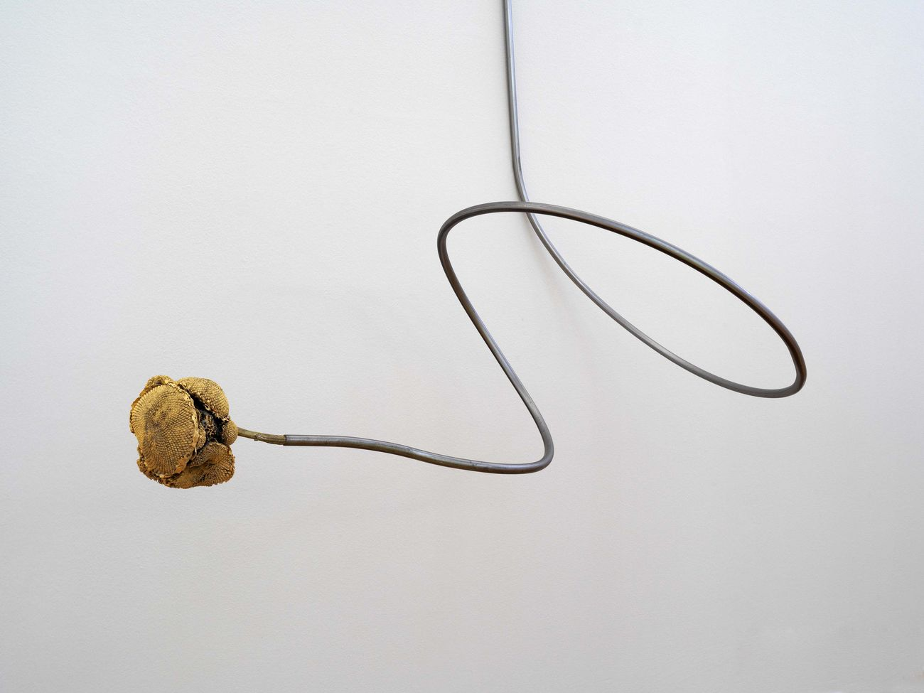 "Alberto Scodro, Sunflower ""flower"", 2020"
