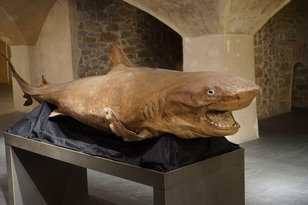 Di squali e di balene. Exhibition view at Museo Marino Marini, Firenze 2020