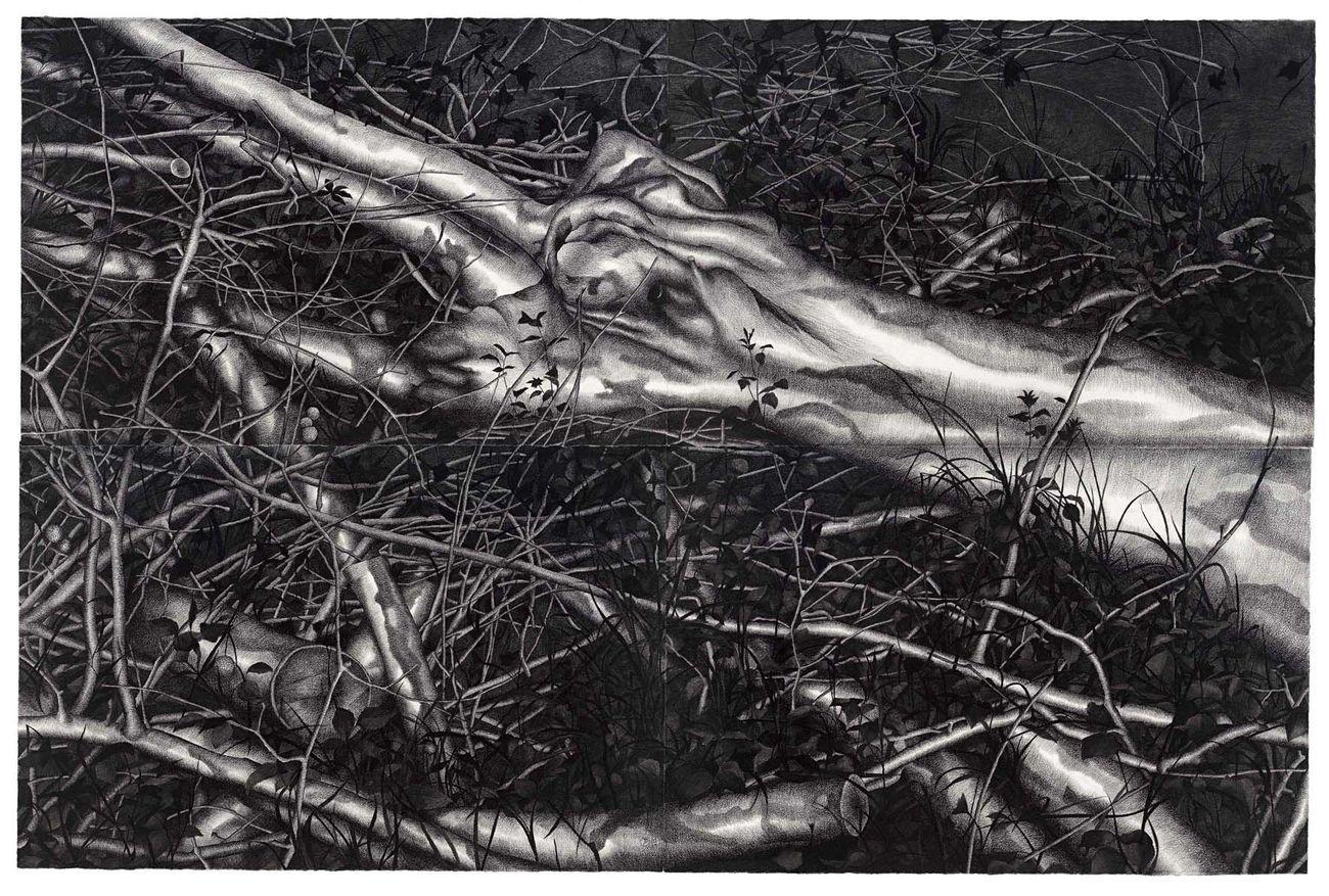 Silvano Tessarollo, Gli alberi siamo noi 3, 2019