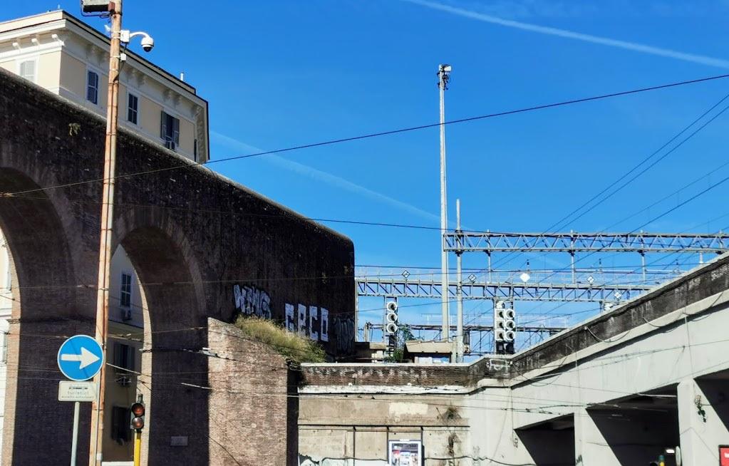 Geco sulle Mura Aureliane
