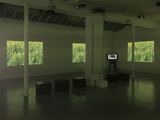 Michael Snow, Video Fields, 2002 2015. Video projections, video on monitor, loudspeaker. Variable dimensions