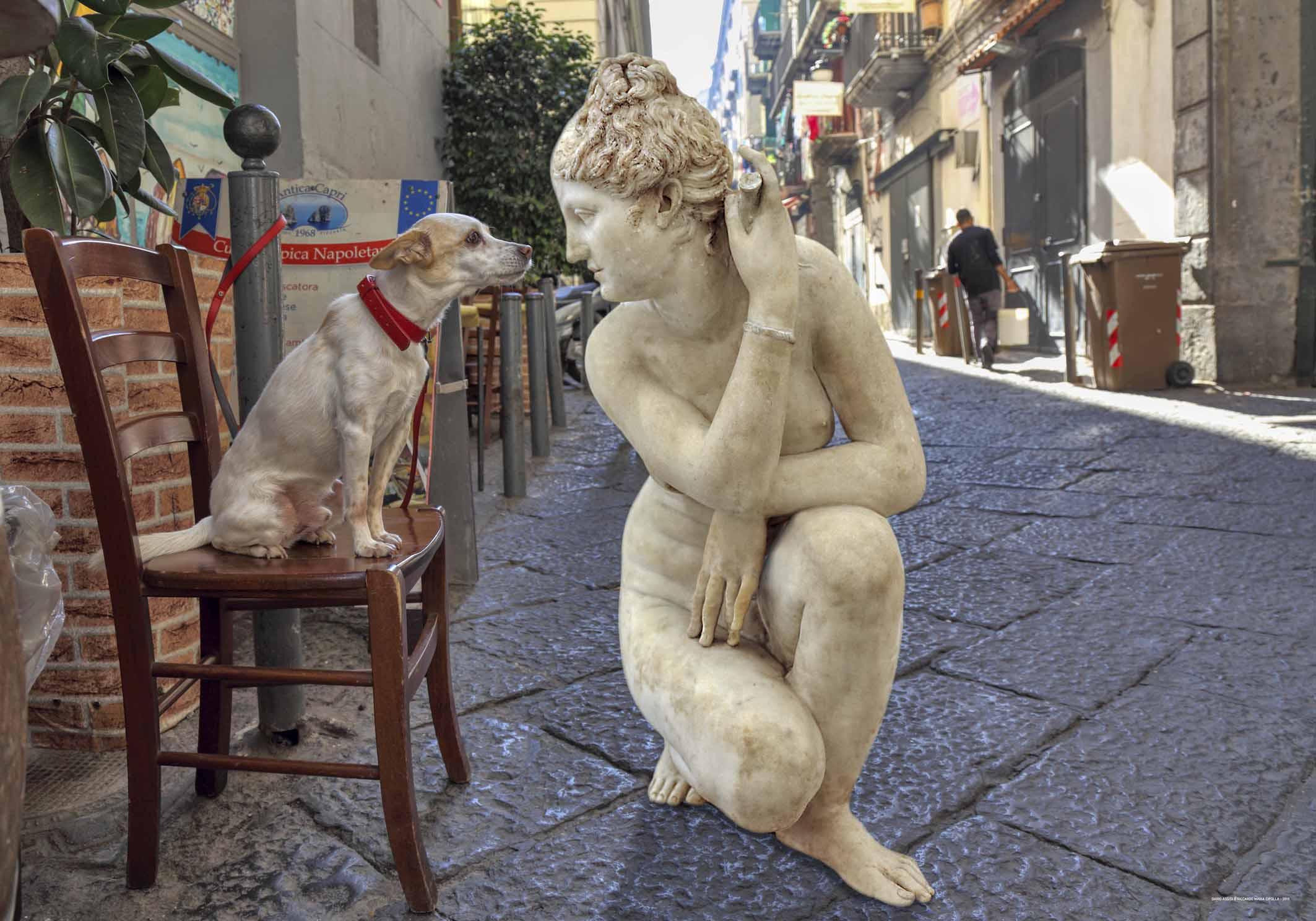 Fuga dal Museo, Cane che annusa, MANN Napoli