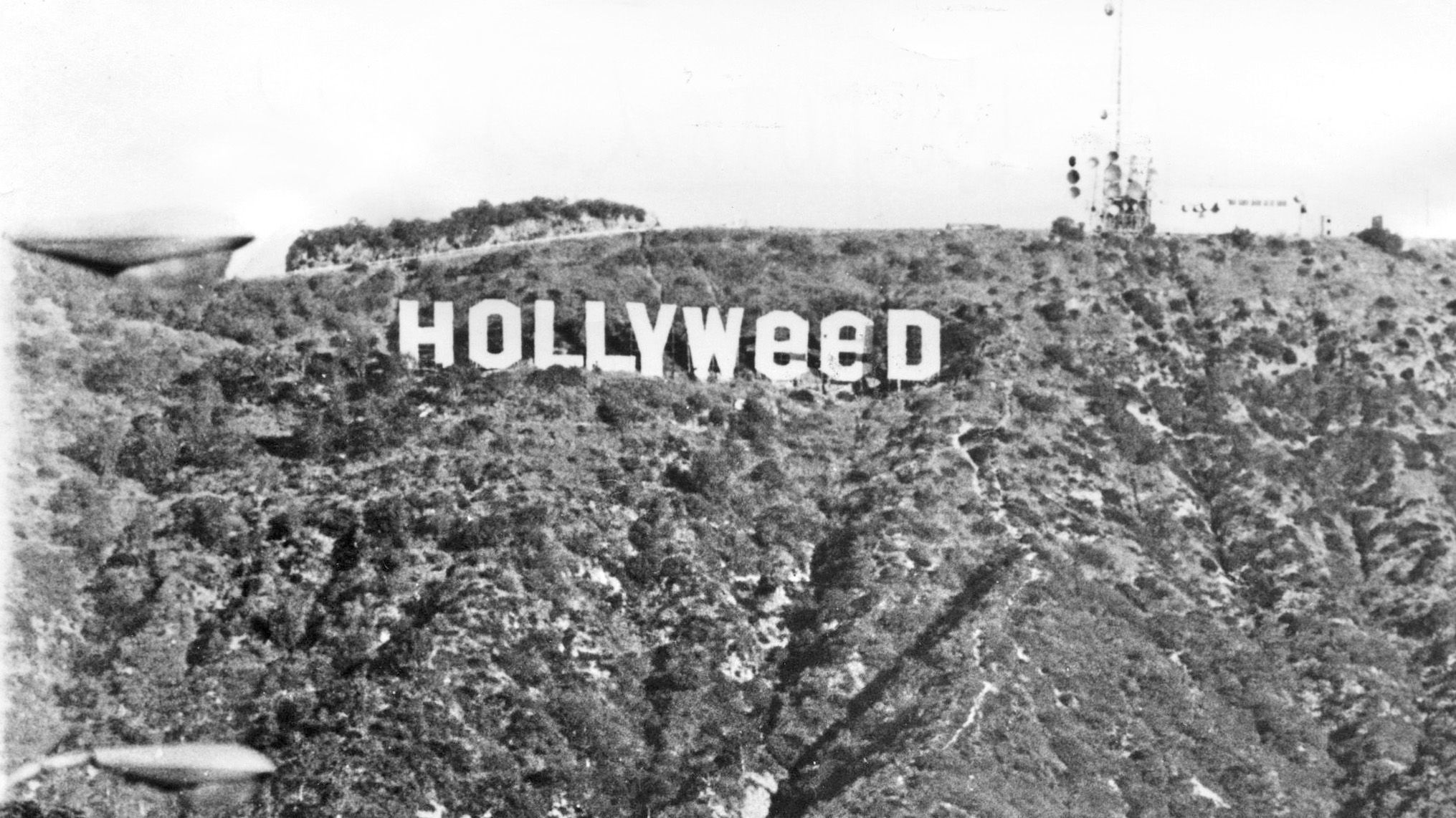 The Most Famous Artist - Hollyweed