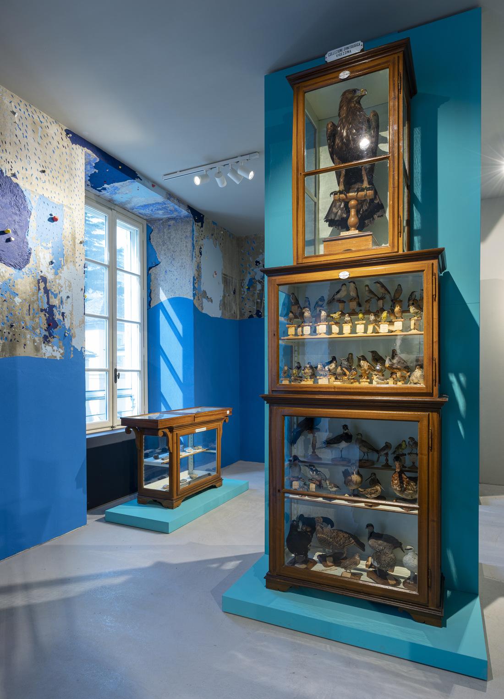 Museo di scienze naturali, collezione dell'Angelo, intervento cromatico alle pareti di Gianluca Quaglia ph Alberto Lorenzina