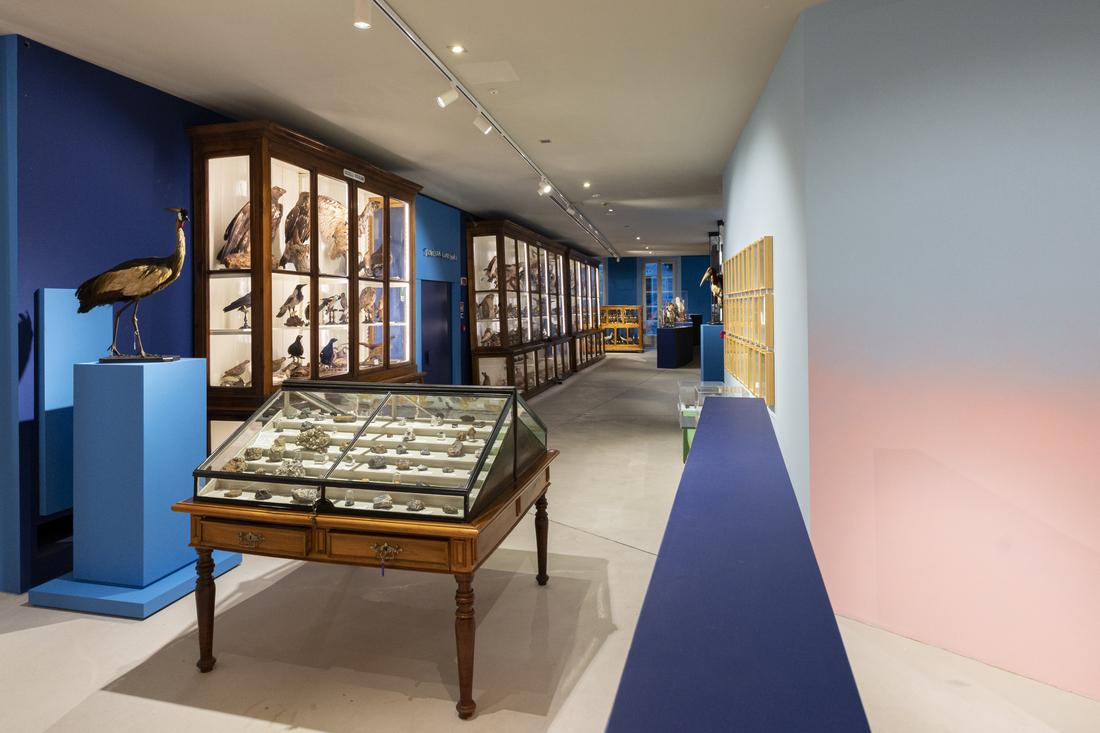 Museo di Scienze Naturali intervento cromatico permanente di Gianluca Quaglia ph Alberto Lorenzina