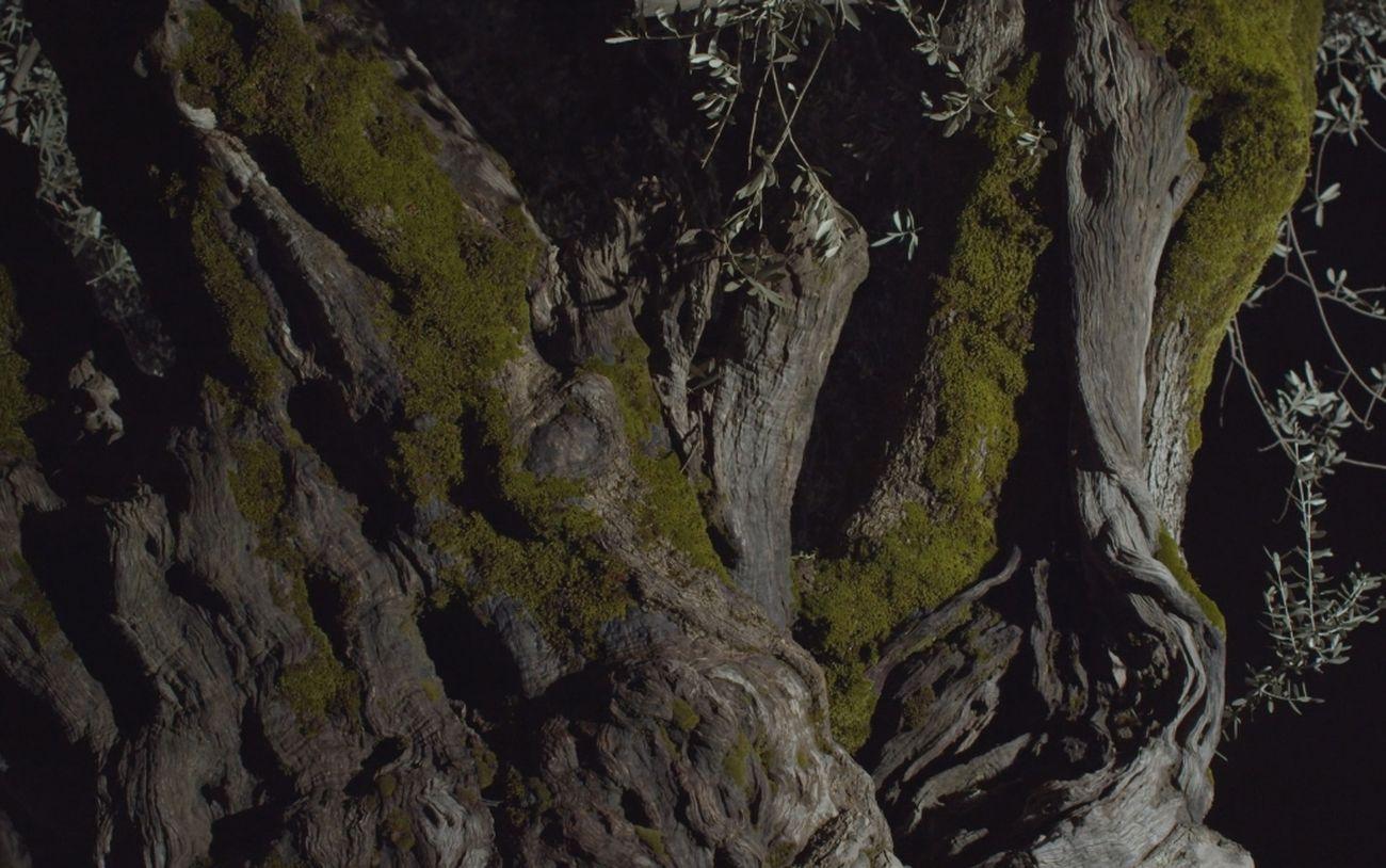 A Roof for Silence, Screenshot Les oliviers, piliers du Temps © Alain Fleischer
