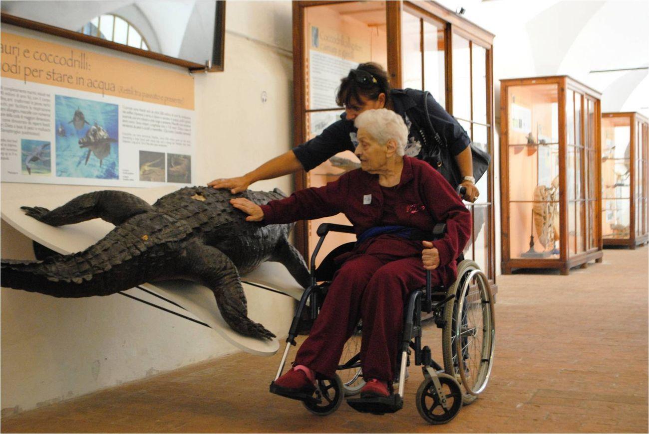 Musei Toscani per l'Alzheimer. Calci Museo di Storia Naturale Foto scattata prima dell'emergenza Covid