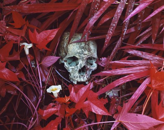 Richard Mosse, Of Lilies and Remains dalla serie Infra, eastern Democratic Republic of Congo, 2012. DZ Bank Art Collection © Richard Mosse