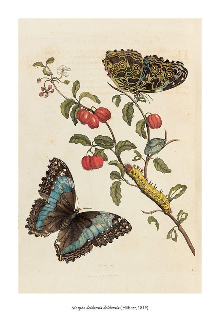 Wendy Williams – La vita e i segreti delle farfalle (Aboca, Sansepolcro 2020)
