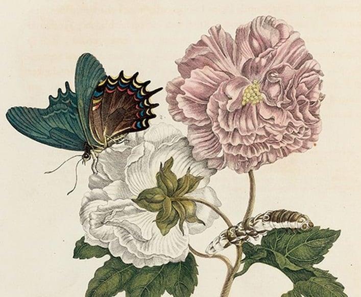 Wendy Williams – La vita e i segreti delle farfalle (Aboca, Sansepolcro 2020), dettaglio