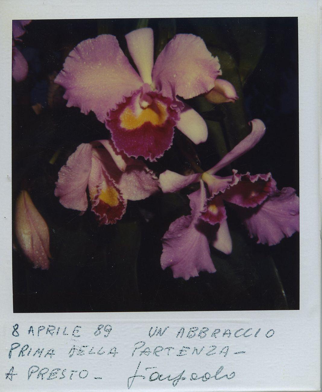 Gian Paolo Barbieri, Seychelles, 1989. Courtesy Fondazione Gian Paolo Barbieri © Gian Paolo Barbieri